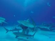 Venti squali per amici